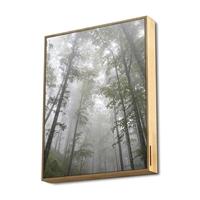 Energy System Frame Speaker Forest (50W.  True . . .